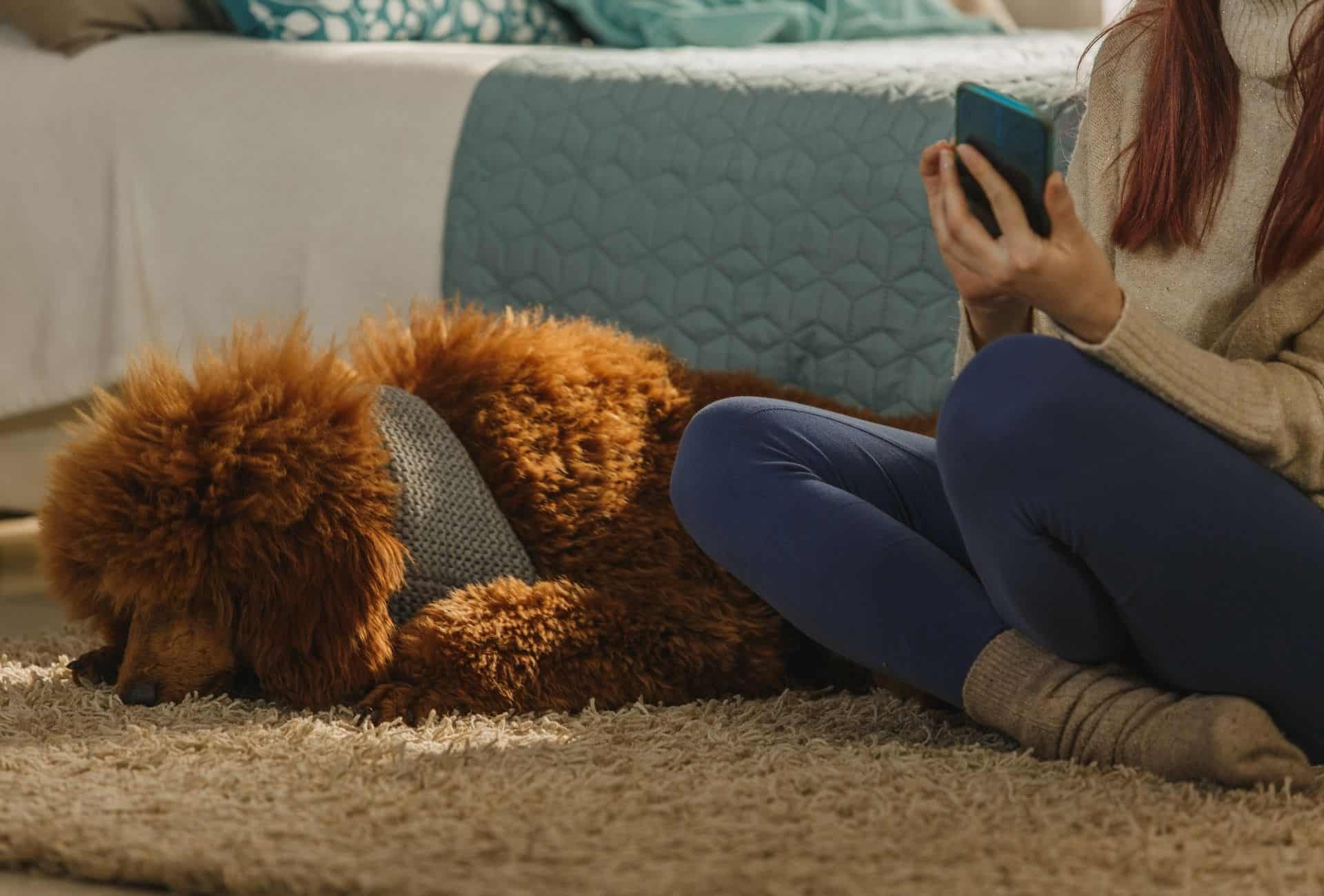 Dog sleeps on the carpet next to a woman while touching her.