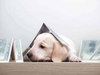 Cute puppy has a folded dollar bill over the head.
