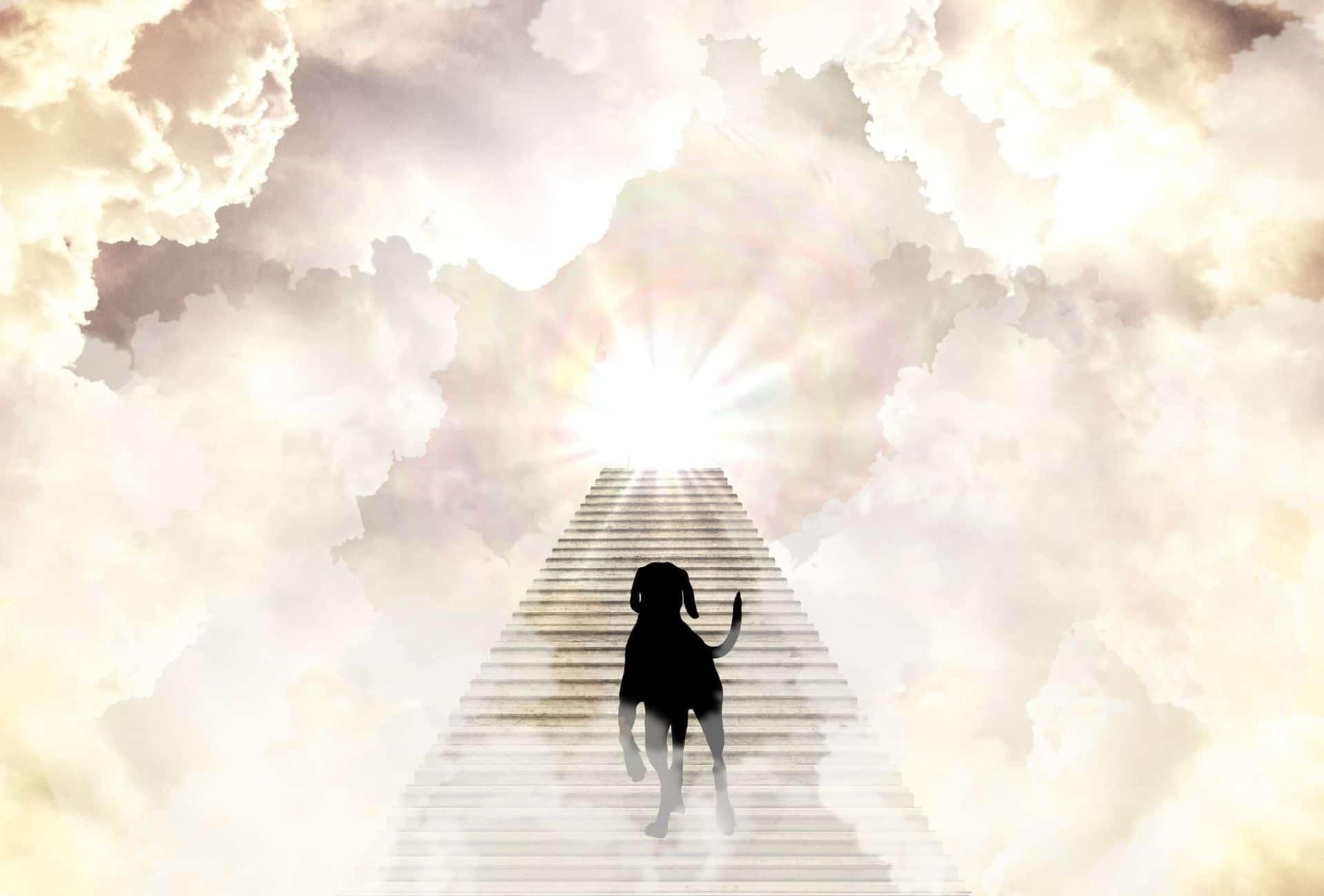 dog soul entering heaven