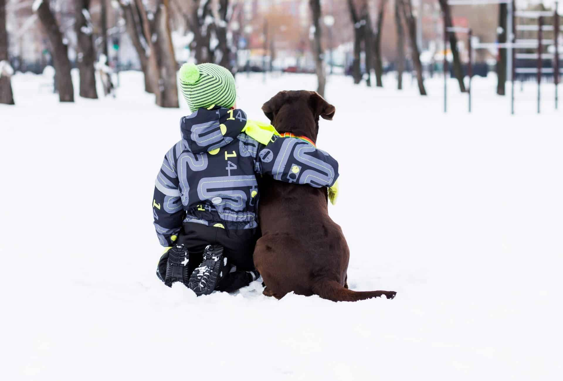 Child sits with his arm around a brown Labrador Retriever in the snow.