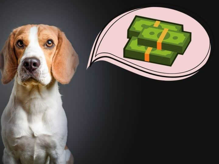 Beagle has a bubble with cash hovering over his head.