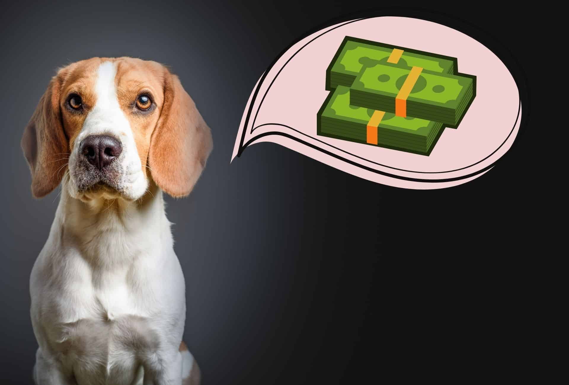 Beagle pup with a bundle of cash in a speech bubble.