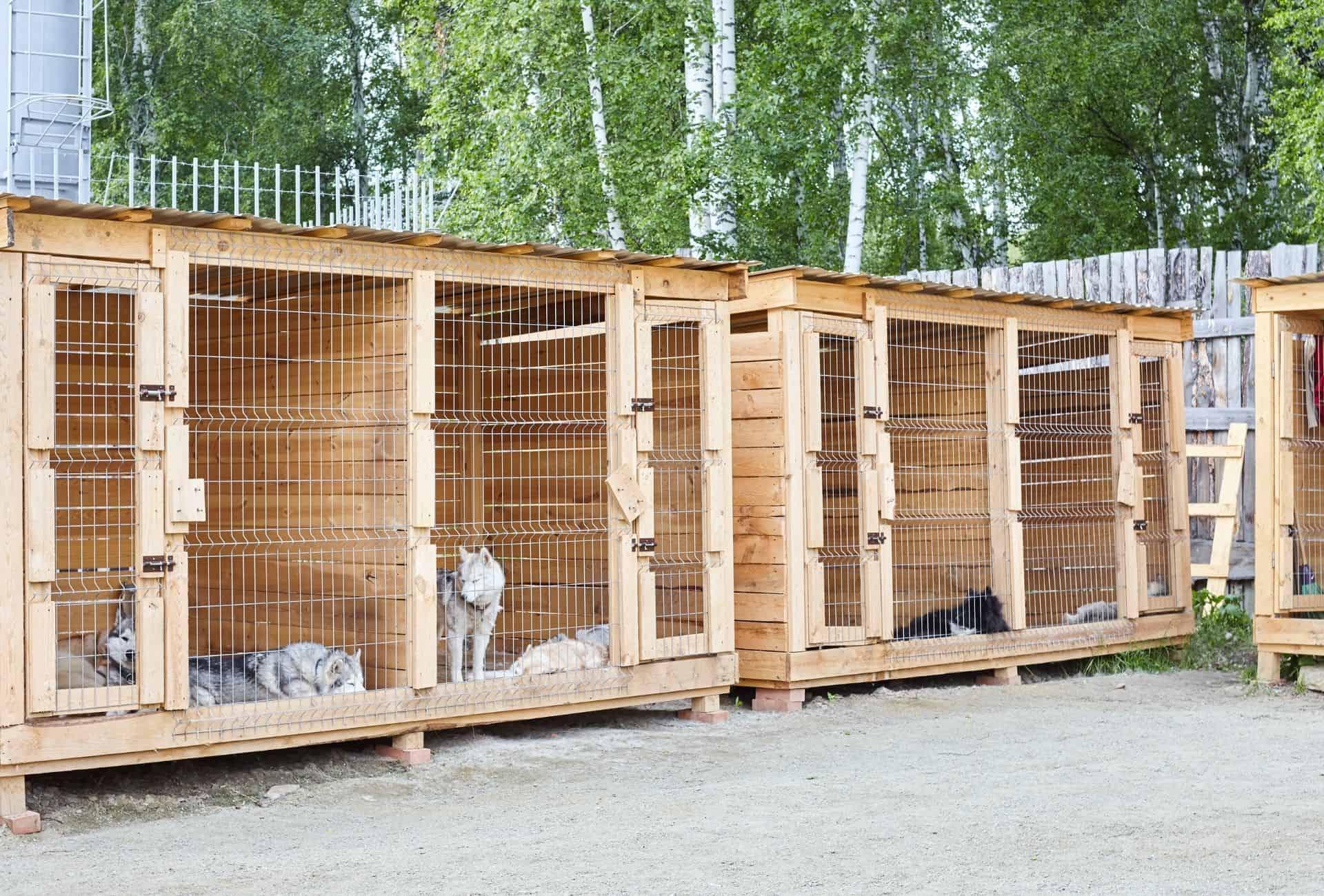 Dogs in boarding kennels.
