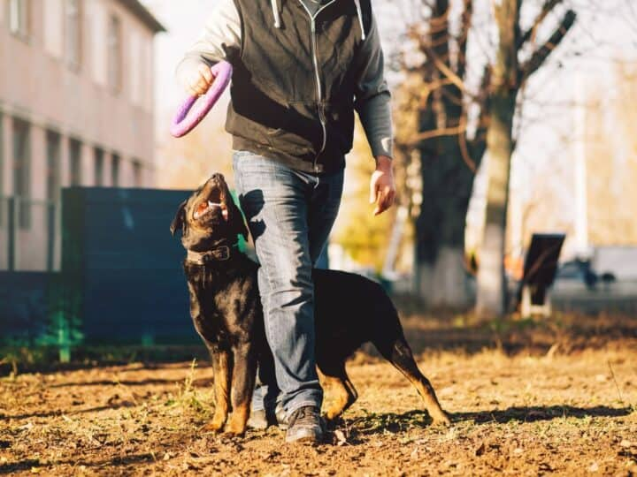 Obedience training can help with boosting your dog's confidence.