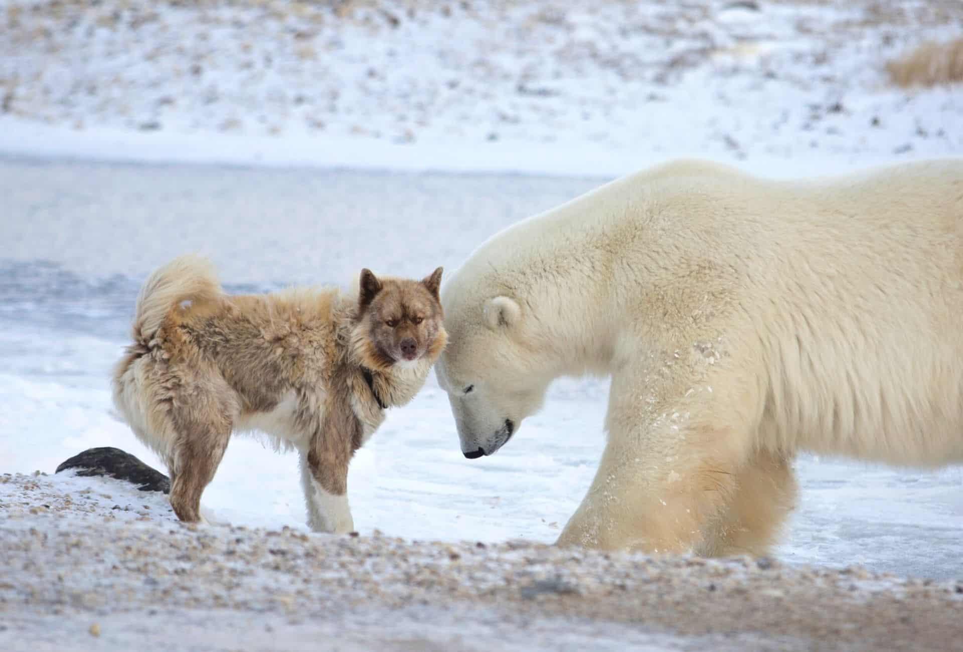 dog with a polar bear in snow