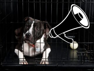 Dog barks behind his crate in a darkened room with a megaphone symbol above the head.