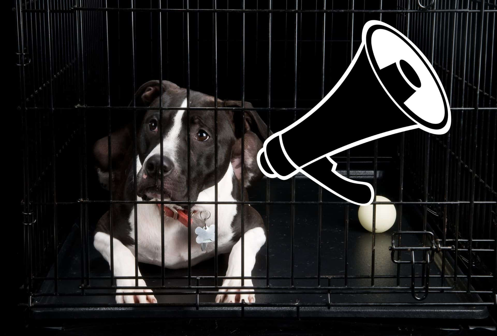 Dog inside of crate with a megaphone next to him showing that vocalization like huffing can be your dog's way of communication.