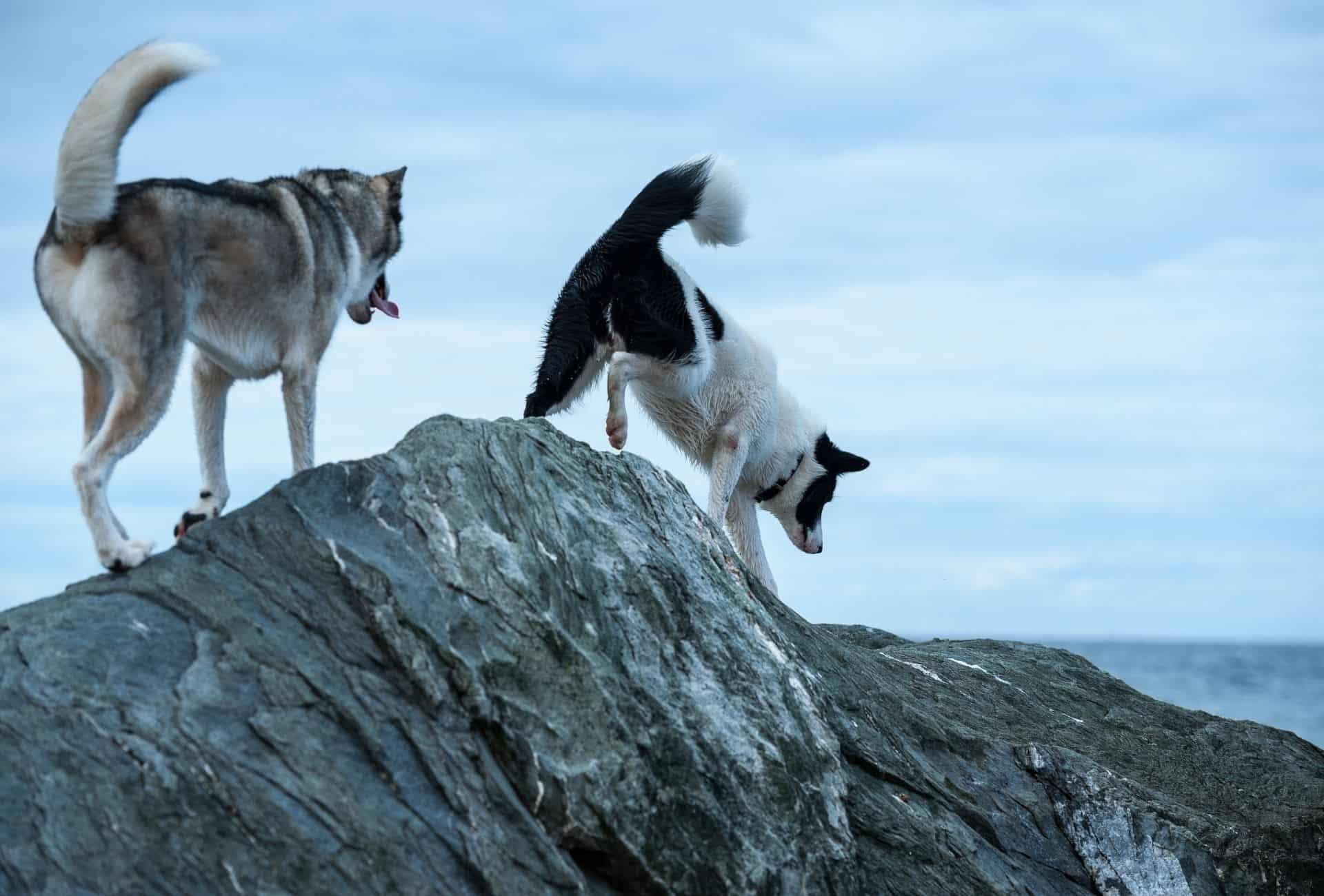 Tener un perro intrépido puede ser excelente al planificar aventuras con una variedad de superficies, sonidos y vistas.