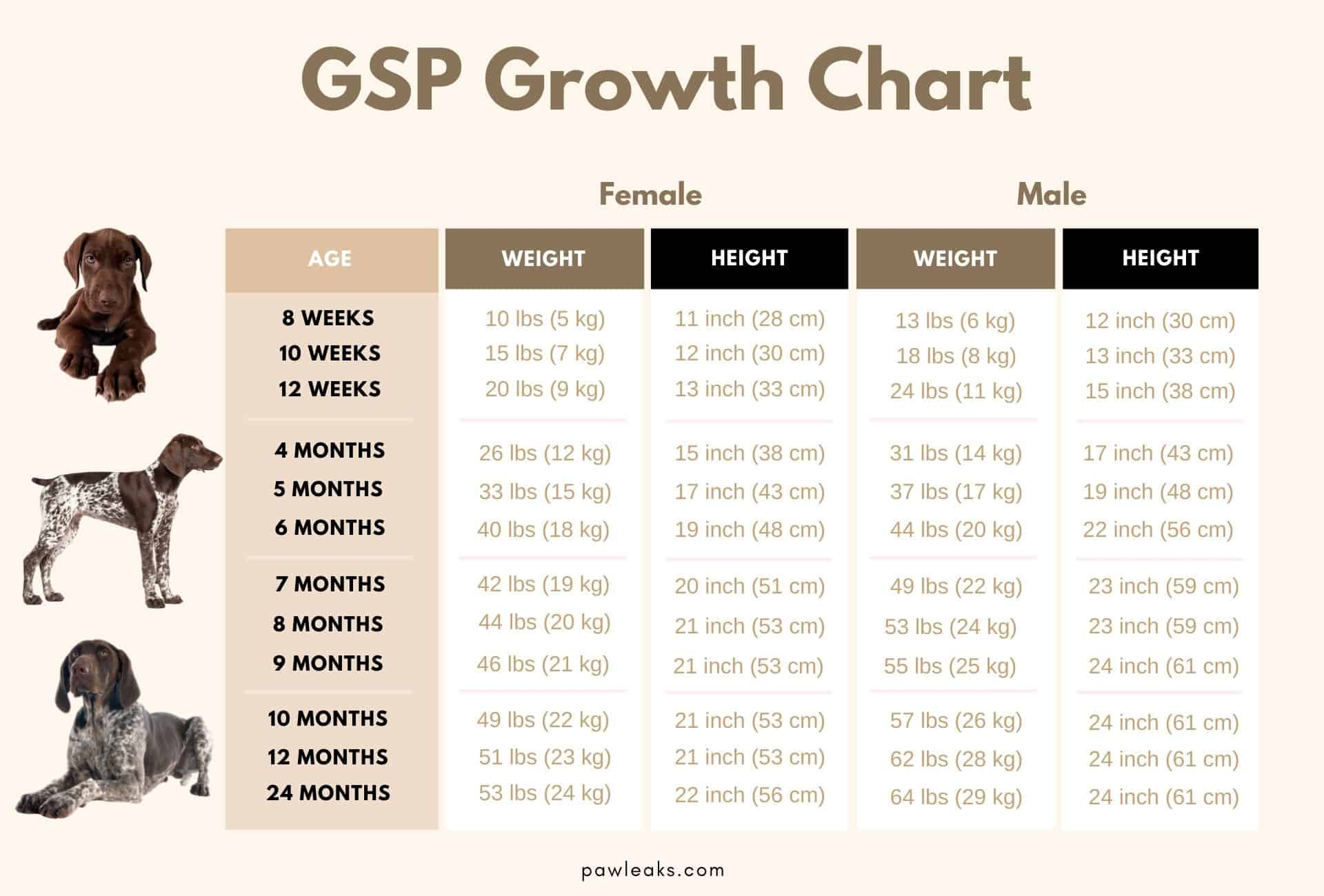 Growth chart for the German Shorthaired Pointer listing the breed's weight and height by age as well as male or female.