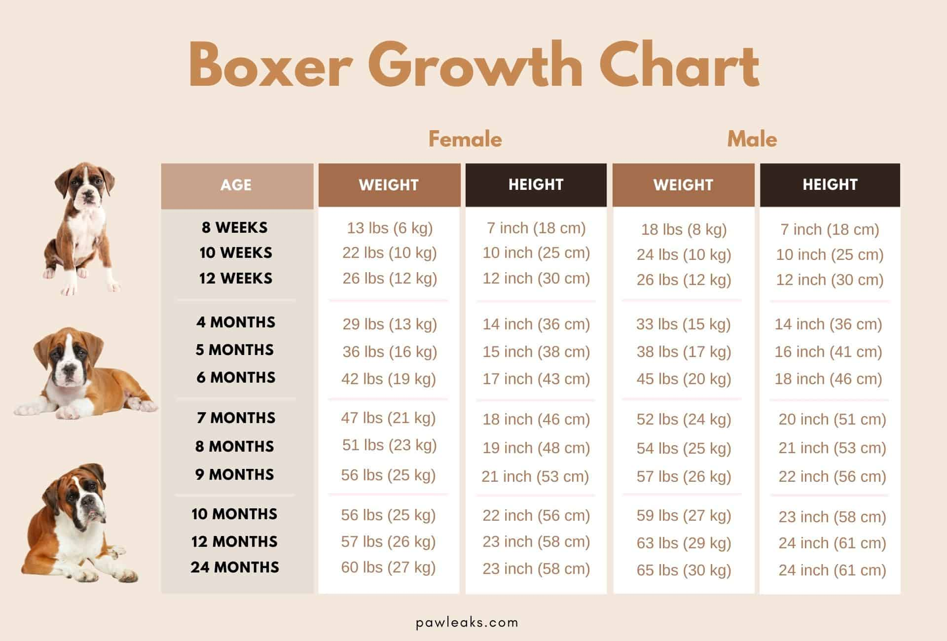 Boxer growth chart.