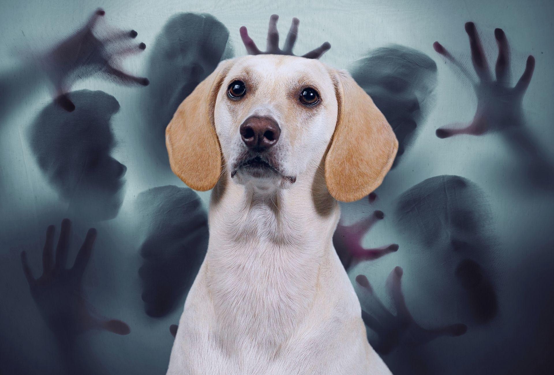 Los perros pueden volverse paranoicos repentinamente, y un indicador podría ser que su perro finge ver cosas.