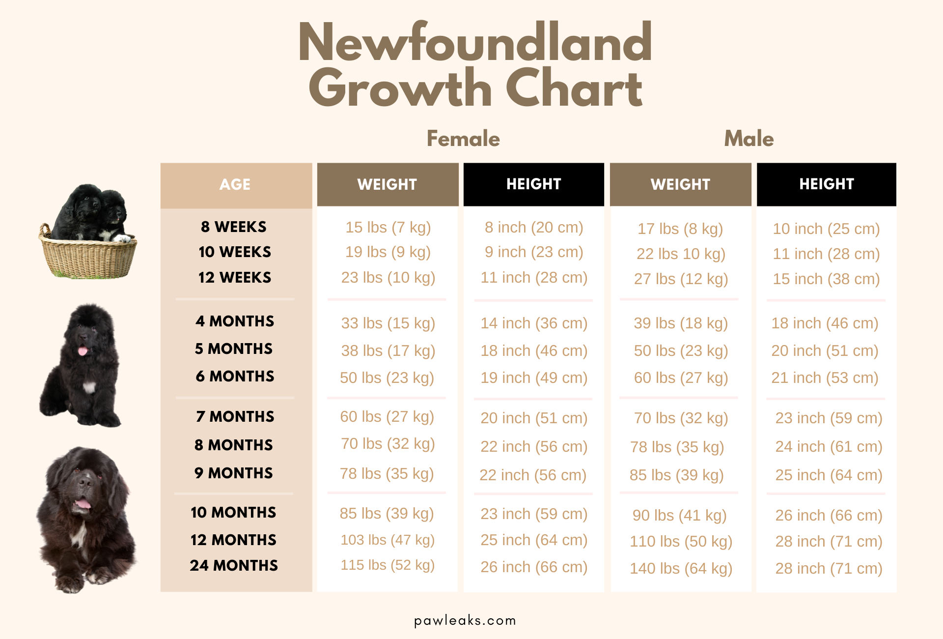 Newfoundland growth chart depicting the age and corresponding weight and height, sorted by male and female.