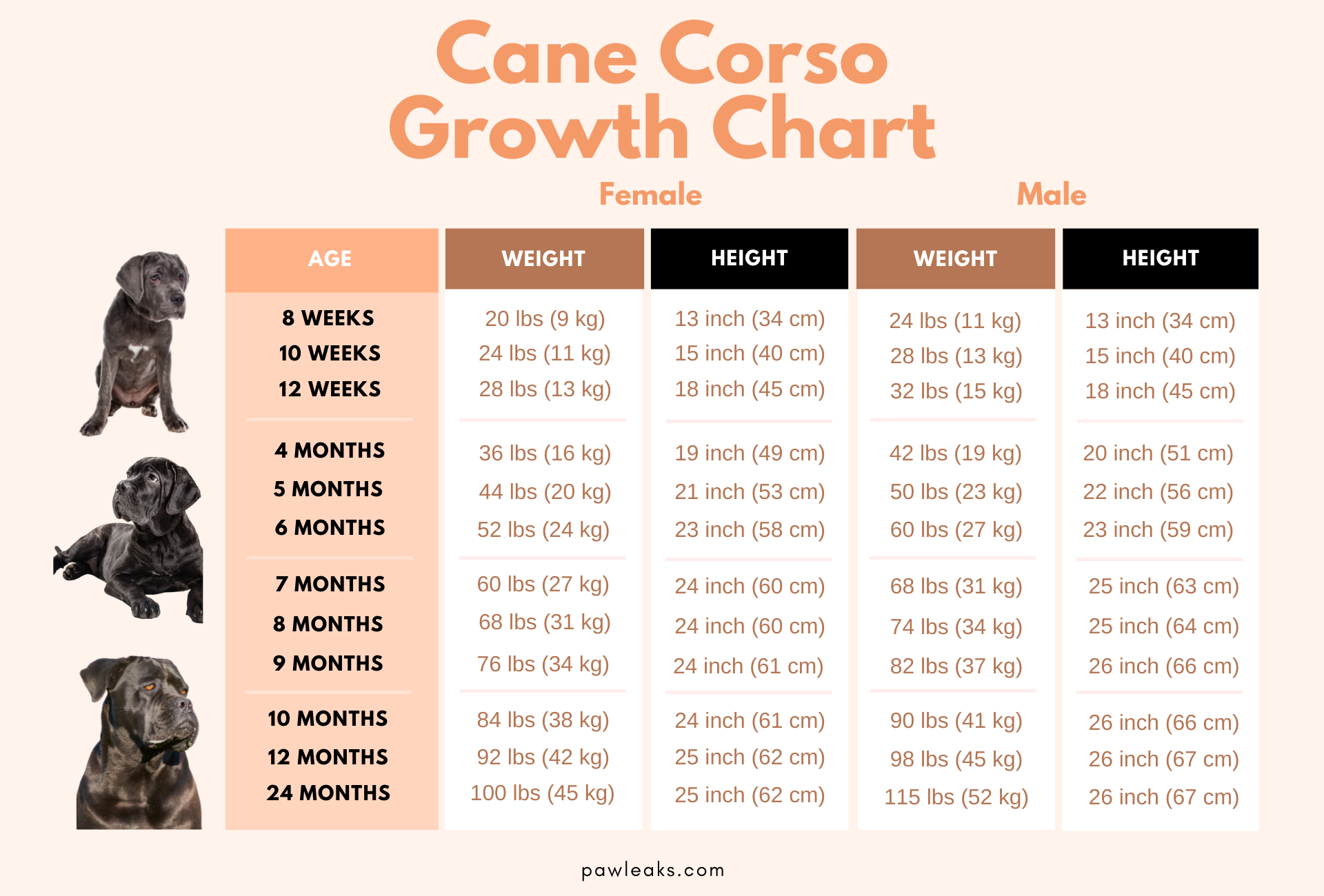 Cane Corso growth chart depicting their weight and height sorted by male and female as well as their age ranging from 8 weeks to 2 years of age.